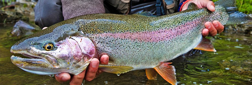 Trout Stocking in the Adirondacks: The Impact of Wilderness Fish Stocking on the Region
